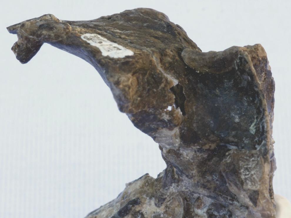 Hallan en la Patagonia argentina restos de un desconocido pájaro jurásico