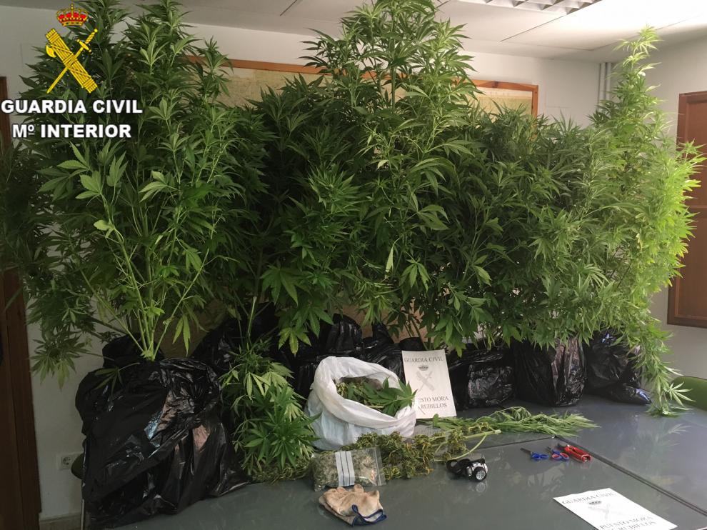 Plantas y materiales hallados por la Guardia Civil en el punto de cultivo desmantelado en Mora de Rubielos.