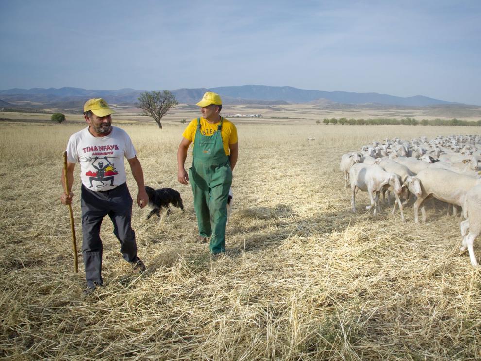 Evelio Ibarzo (con peto verde) y su hermano Bernardino, en su explotación ganadera en Mesones de Isuela, en la comarca del Aranda.