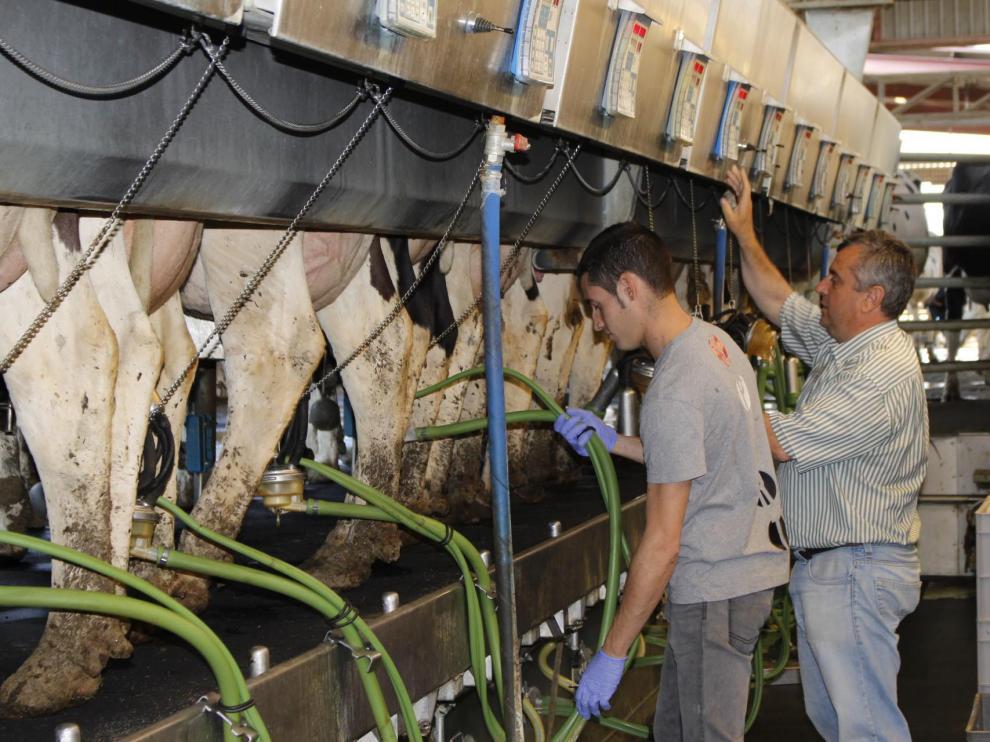 Instalaciones de Granja San José, en Tamarite de Litera (Huesca), una de las mayores explotaciones lácteas de Europa.