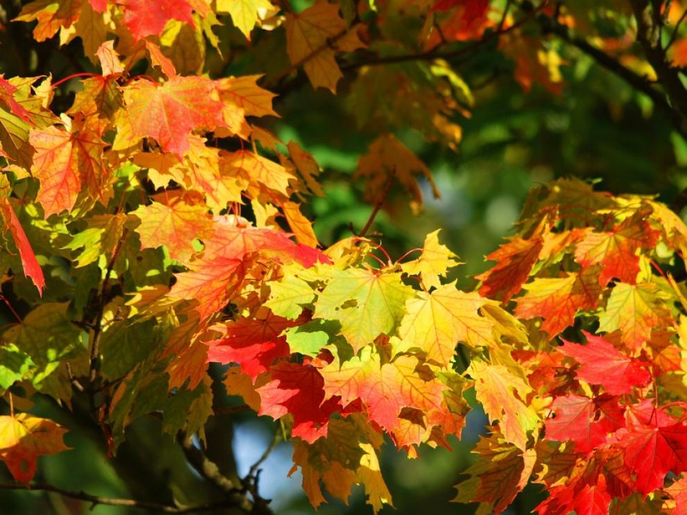 El otoño, que comenzó el jueves 22 de septiembre, conlleva una disminución de las horas solares y una ligera bajada de las temperaturas.