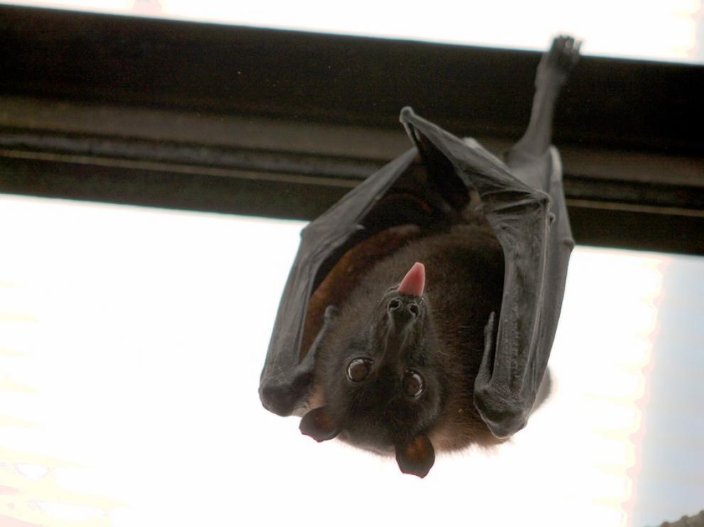 Zaragoza celebra la noche de los murciélagos para dar a conocer su aportación