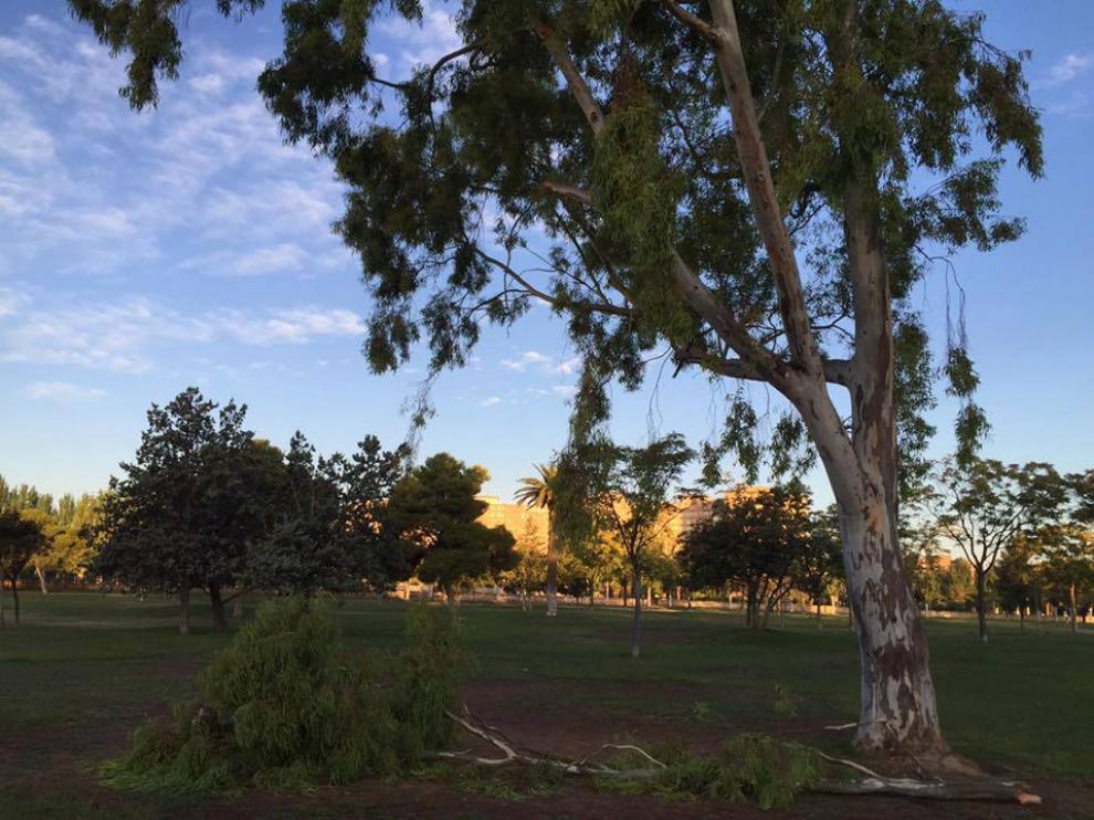 Rama caída en el parque Tío Jorge