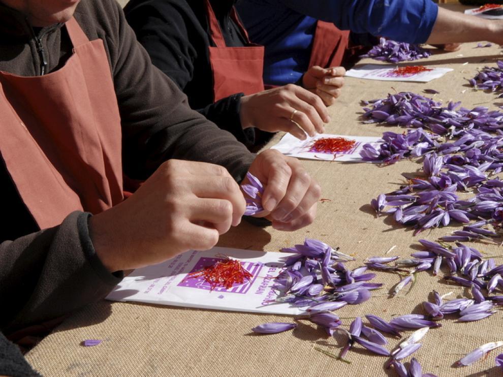 La técnica conocida como esbrinar consiste en separar el estigma de la flor del azafrán.