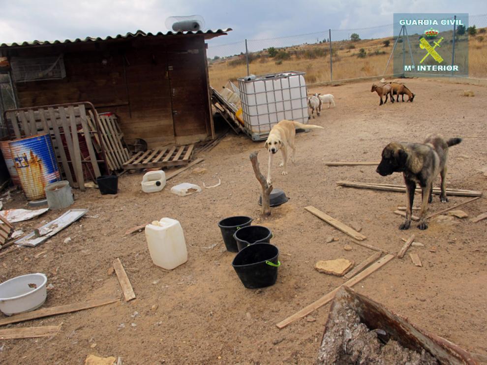 El Seprona recibió un aviso de la Policía Local de Soria alertando del mal estado de los animales
