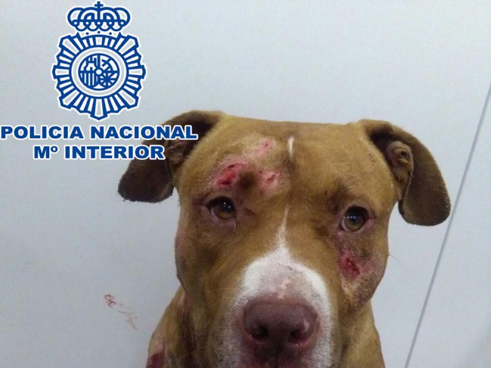 El perro rescatado por la Policía.