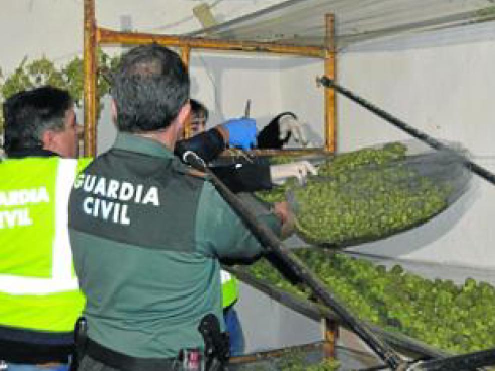 La Guardia Civil halló cogollos de marihuana en una de las masías.