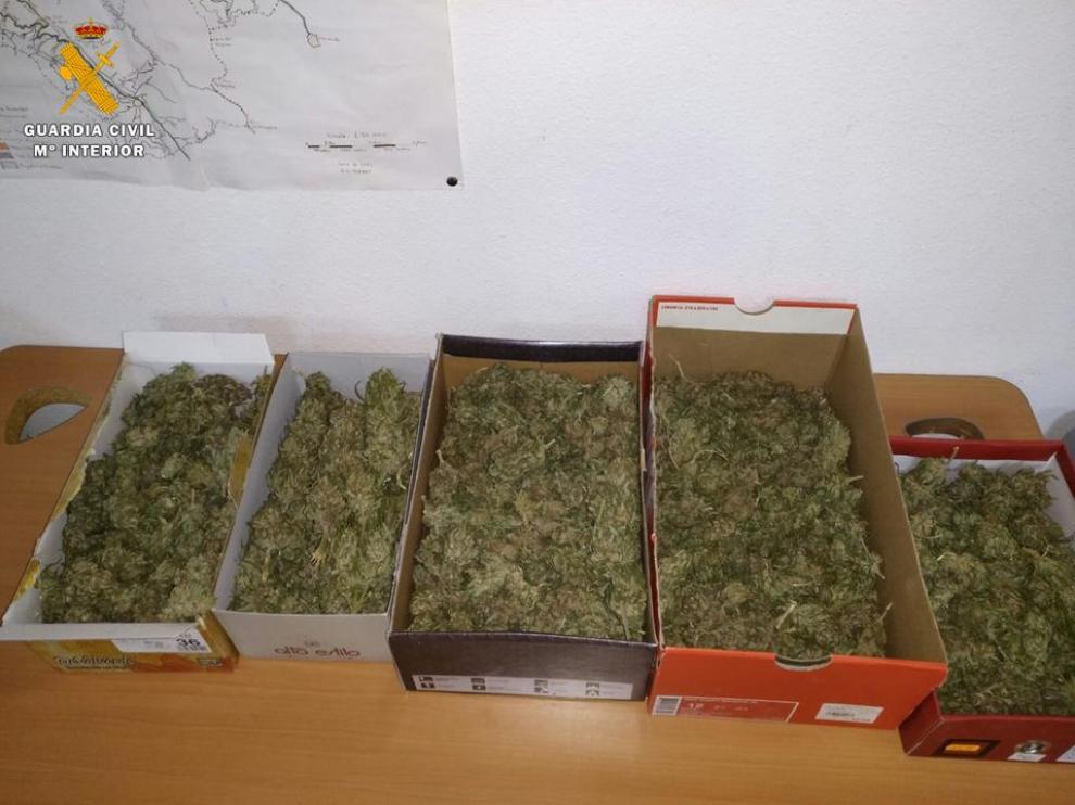 Cogollos de marihuana.