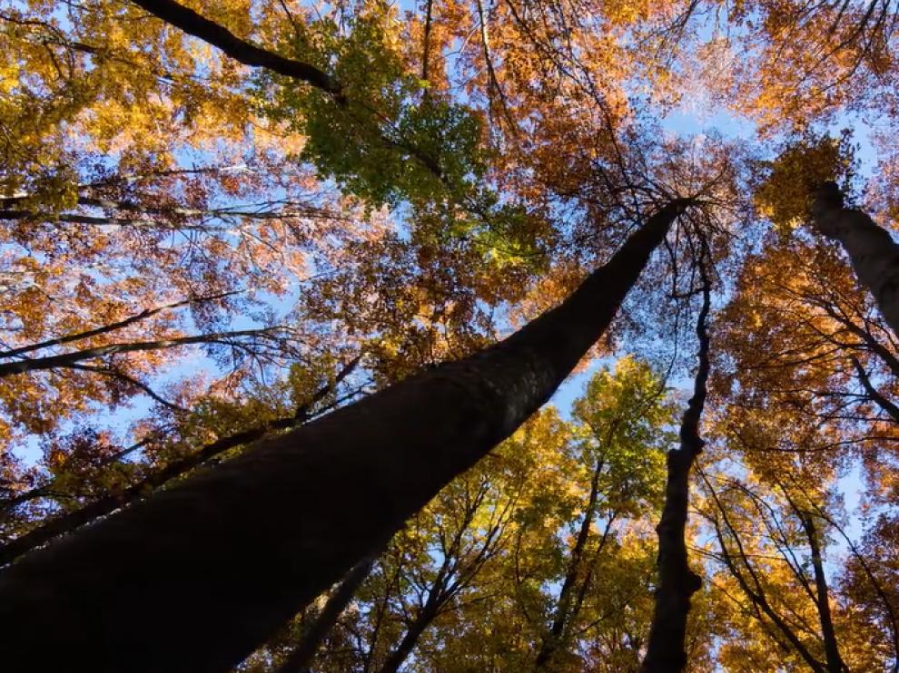 El otoño en la Hoya de Huesca, en dos minutos