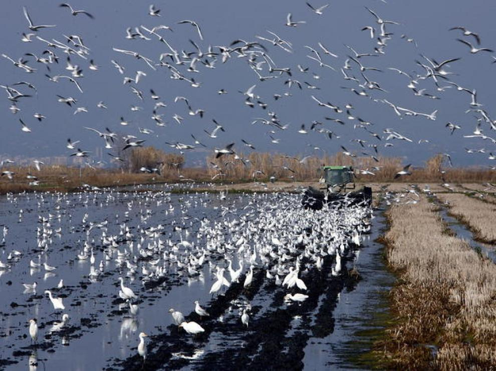 El suceso ha ocurrido cerca del delta del Ebro