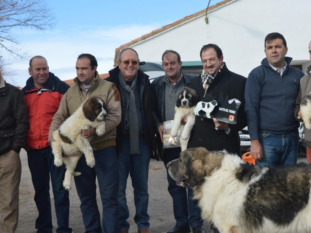 Cuatro ejemplares de mastín del Pirineo se han entregado este martes en Concud.