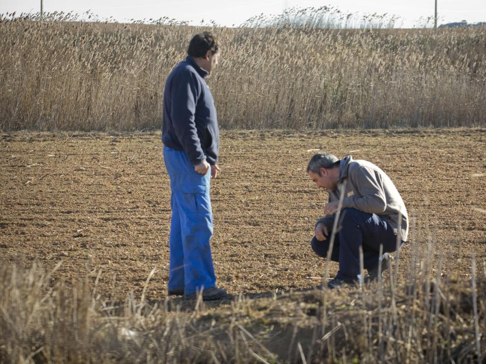 Fernando Bermadaus y José Antonio García observan los daños en un campo donde plantaron cereal, en Épila.