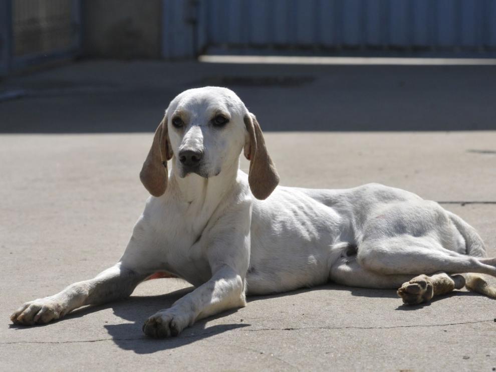 Uno de los perros recogidos por el centro de animales de la DPH.