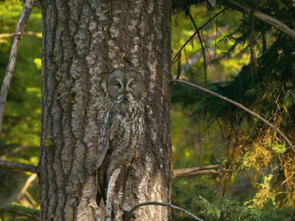 El camuflaje es un arma natural usada por cientos de especies animales para pasar desapercibidas.