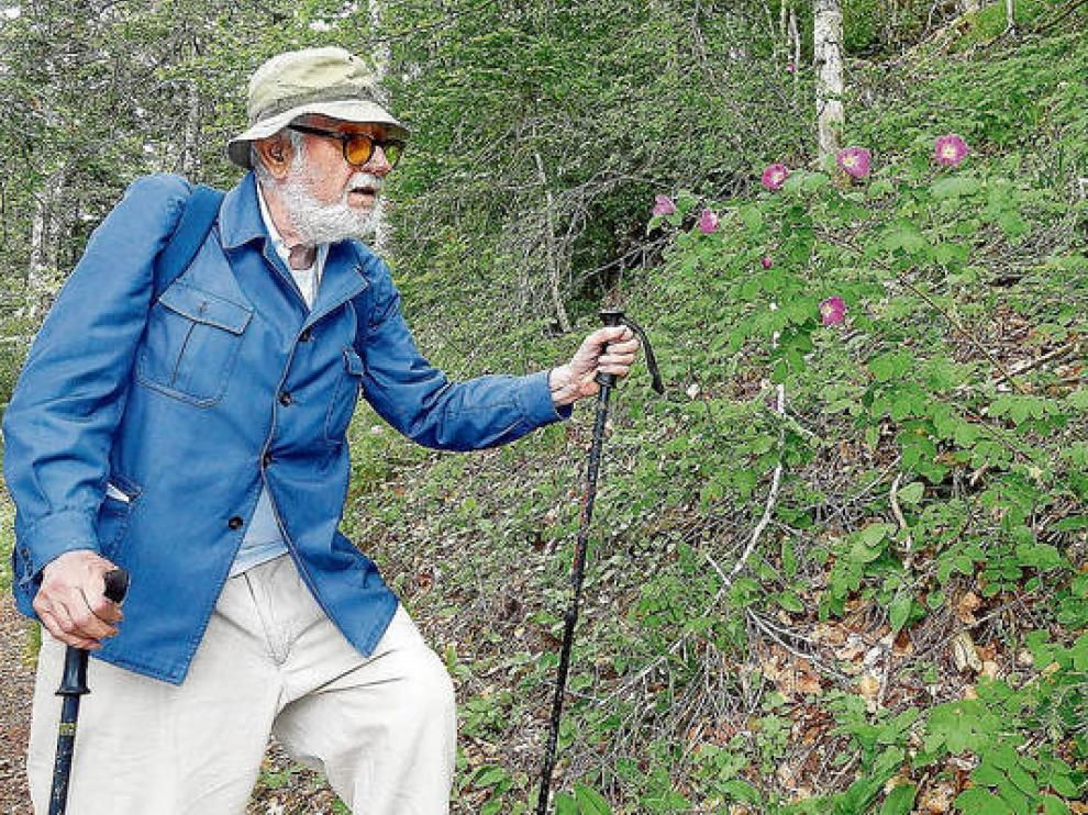 Pedro Monserrat, en un subida al Oroel, contemplando rosas alpinas