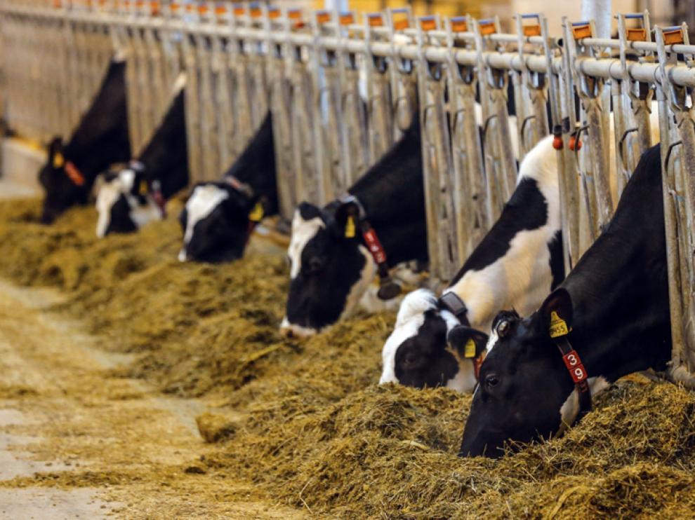 En la vaquería de Noviercas, Valle de Odieta quiere invertir 95 millones de euros para crear 250 empleos.