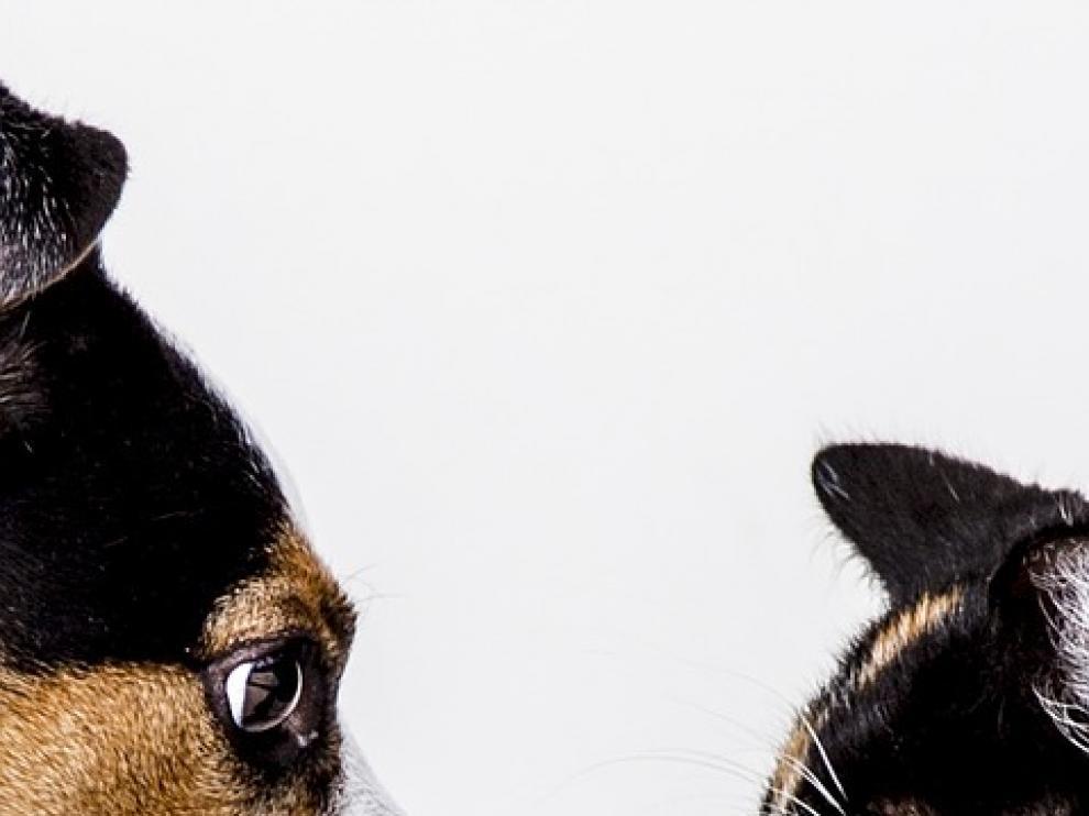 Perros contra gatos: mitos sobre estas mascotas