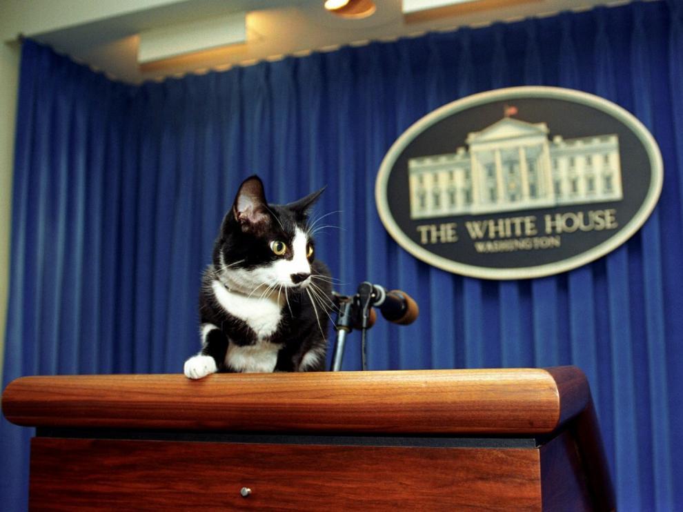 Socks, la mascota de los Clinton que dio fecha al Día Internacional del Gato.