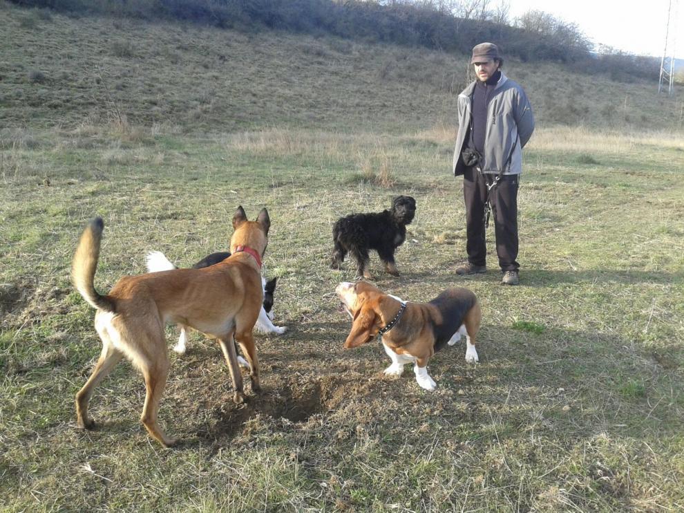 Perros truferos: en busca del oro negro de Aragón