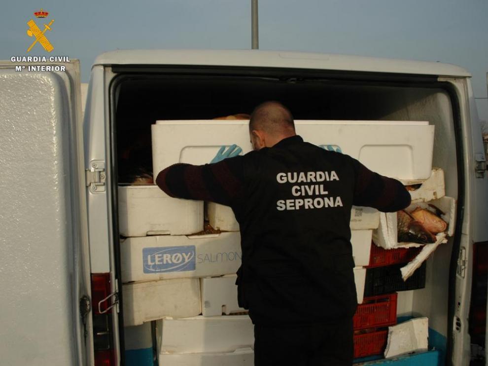 Un agente del Seprona, con la furgoneta detenida en la A-2, a la altura de El Frasno, cargada con casi 2.000 kilos de carpas con destino a Rumanía.