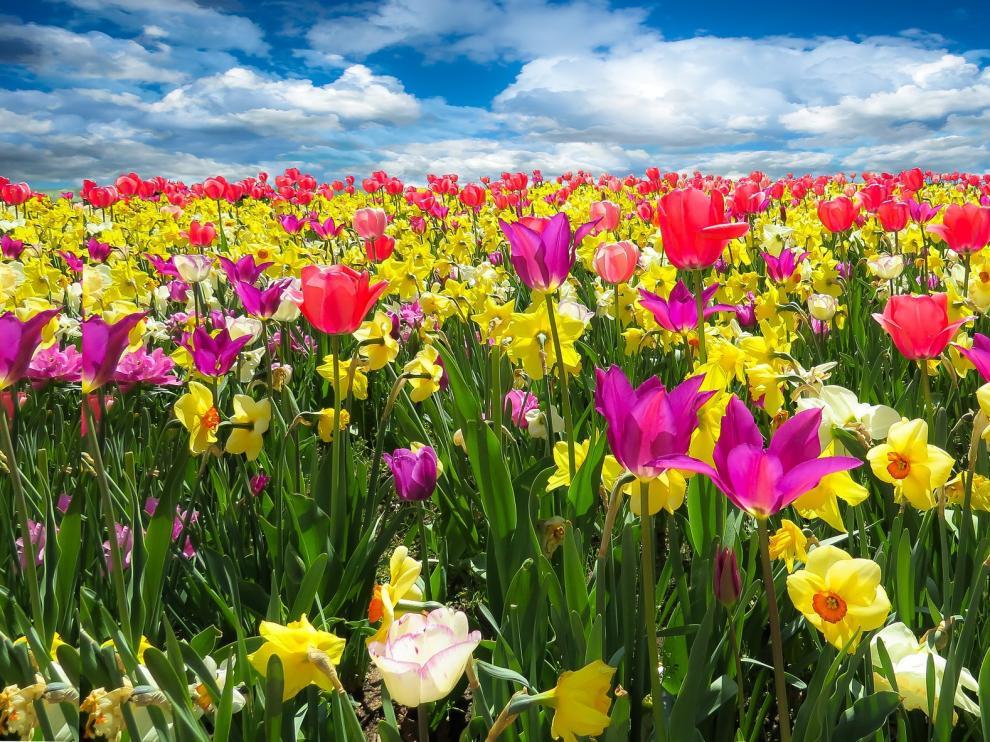 El color se adueña de los campos en primavera.