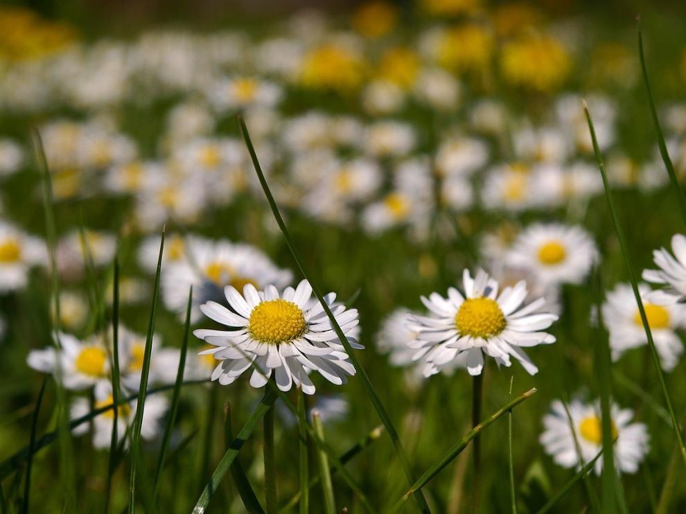 Abril, el mes en el que empieza el estallido de la primavera.