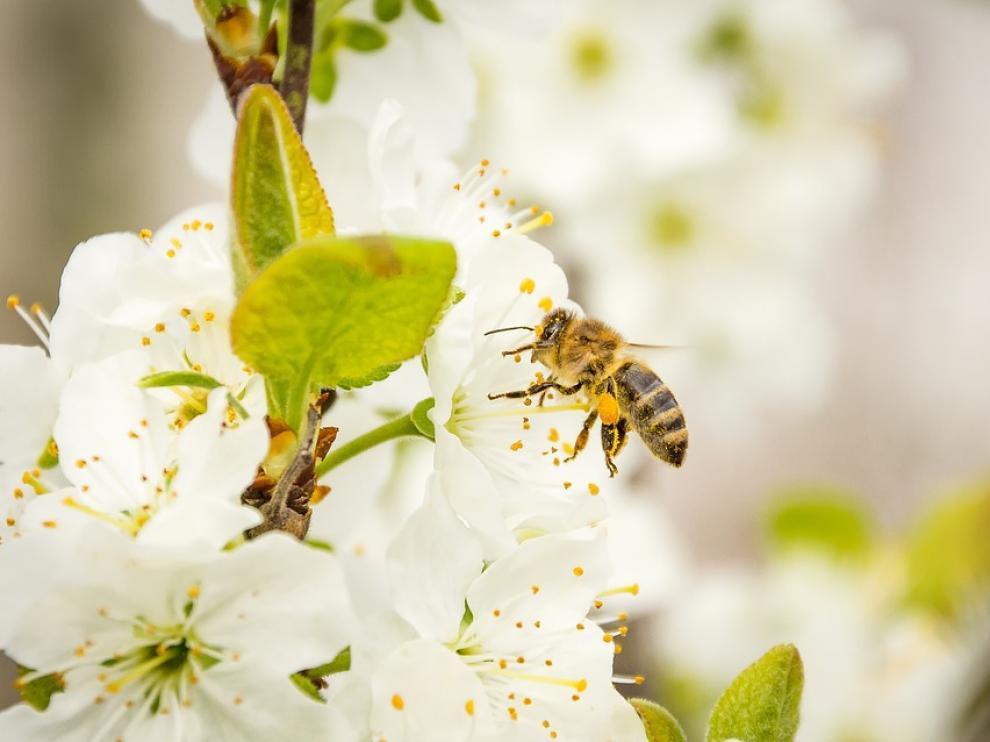 En época de polinización, aumentan las consultas sobre las alergias en las oficinas de farmacia.