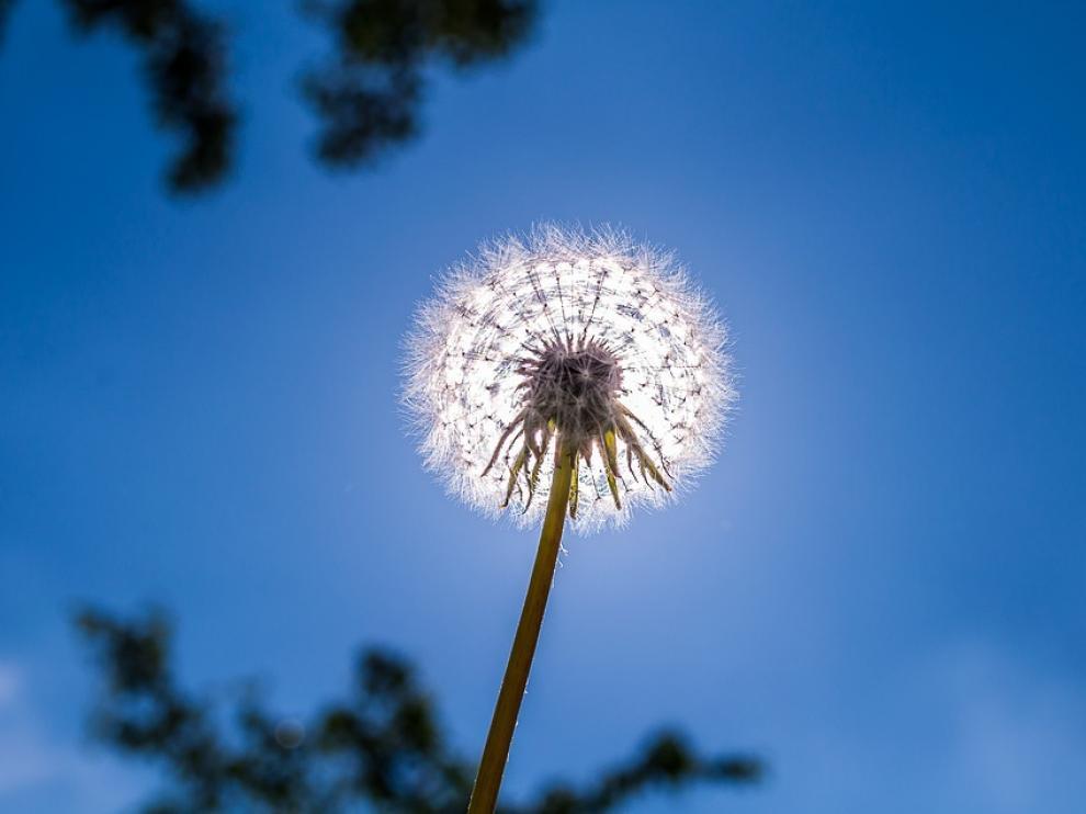 Si se es alérgico al polen, conviene conocer cuál es el alérgeno responsable de esa alergia y la época de mayor afección.