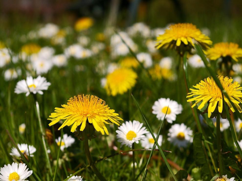 La primavera es la estación de las flores y del viento, el frío, el calor, la lluvia...