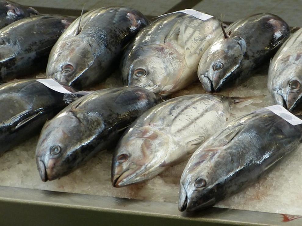 Atún fresco en una pescadería.