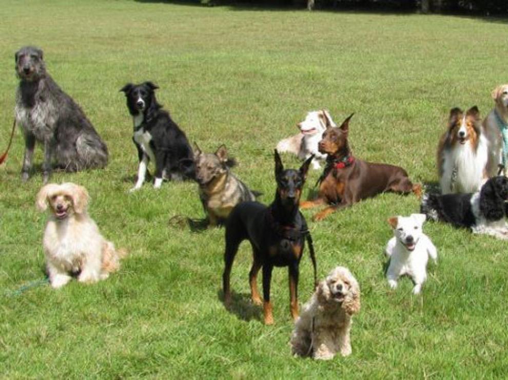 Las razas de perros son muy diversas entre ellas