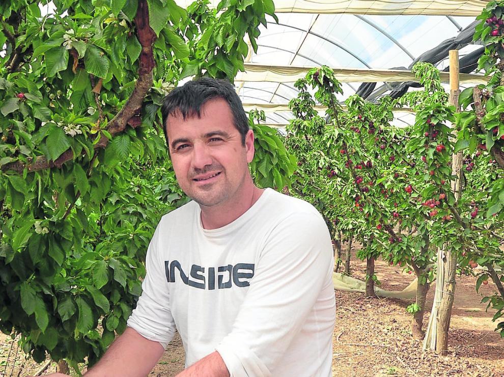 Javier de Pablo, de la empresa familiar oscense Fruit Luxury, muestra las cerezas que cultiva.