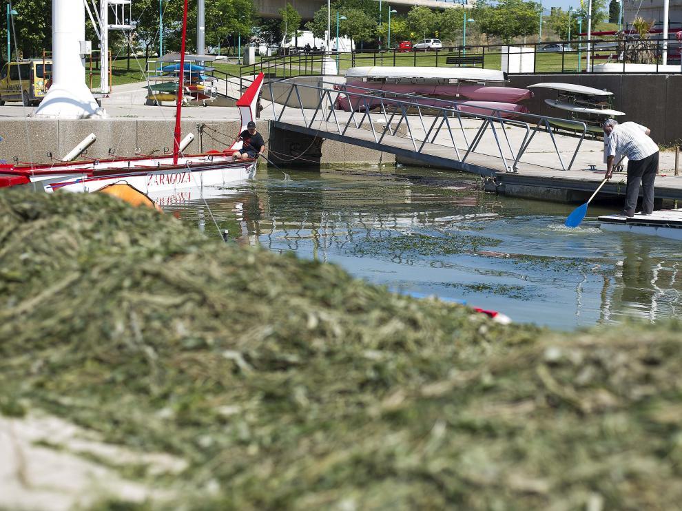 Varios vecinos retiran las algas del entorno del embarcadero de Vadorrey.