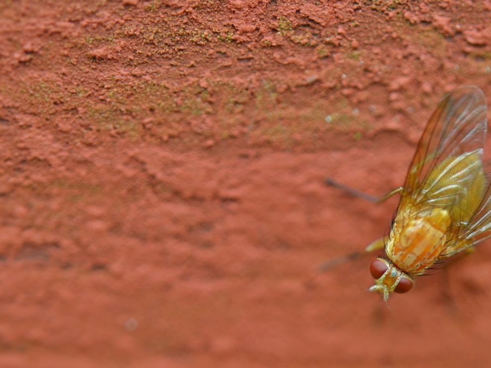 Una mosca, compañera casi inevitable de los días de calor.