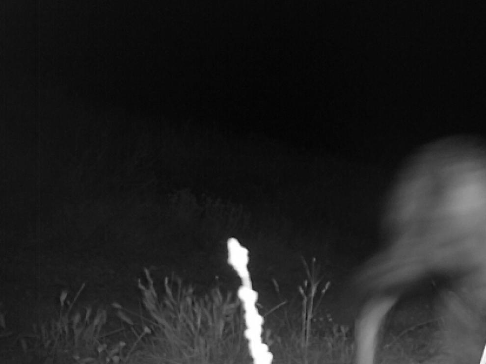 Foto nocturna del lobo detectado la semana pasada en el término de Leciñena.