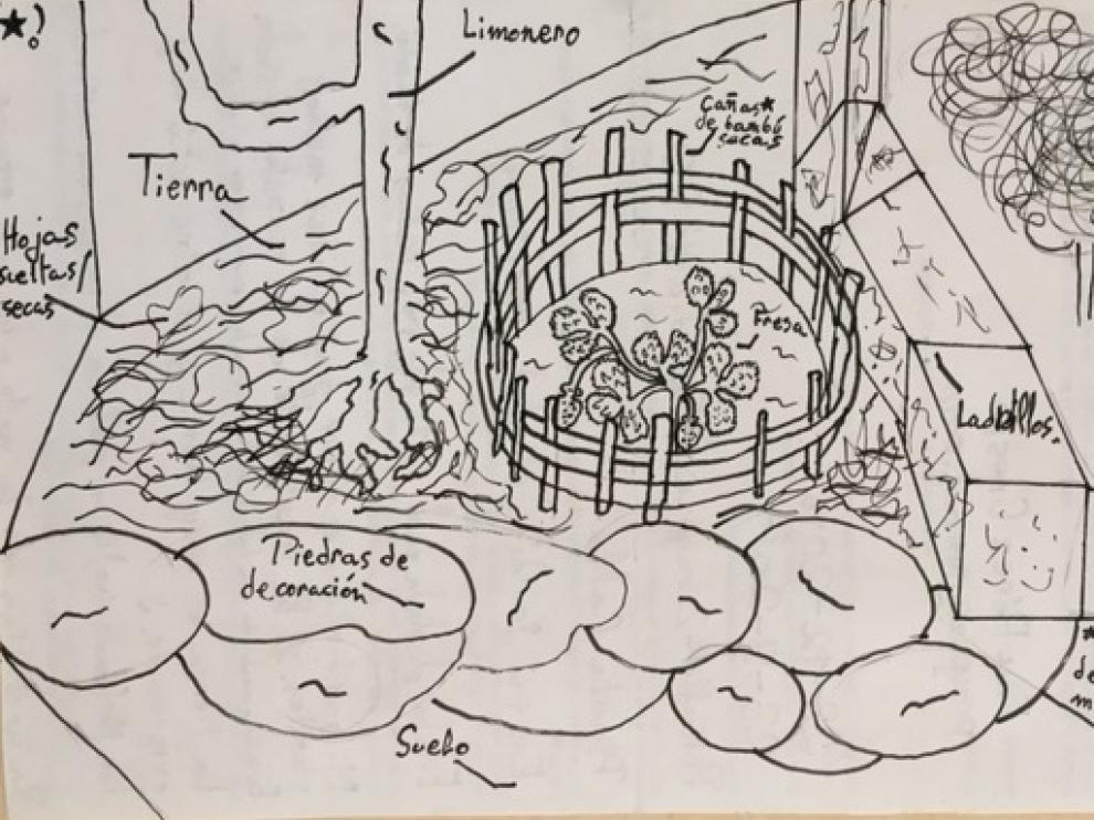 Dibujo de la ubicación de una planta de fresas participante en el proyecto 'Vigilantes del cierzo'.