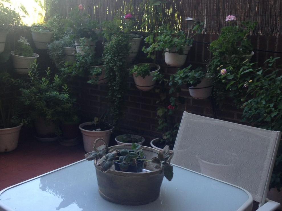 Planta de fresas en casa de Pilar Campos, participante del proyecto 'Vigilantes del cierzo'.
