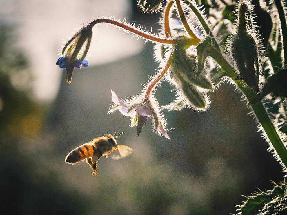 Las abejas son especialmente vulnerables al cambio climático, ya que tienen poca capacidad de reacción ante los desastres naturales