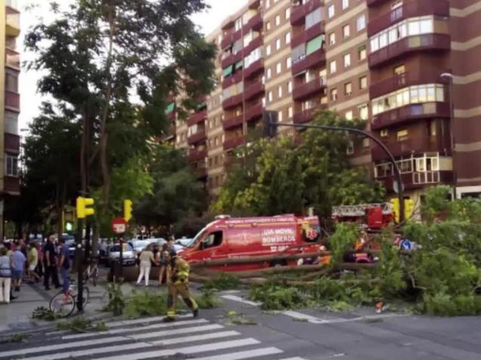 Una persona resultó herida este miércoles al caerle un árbol en Camino de las Torres.