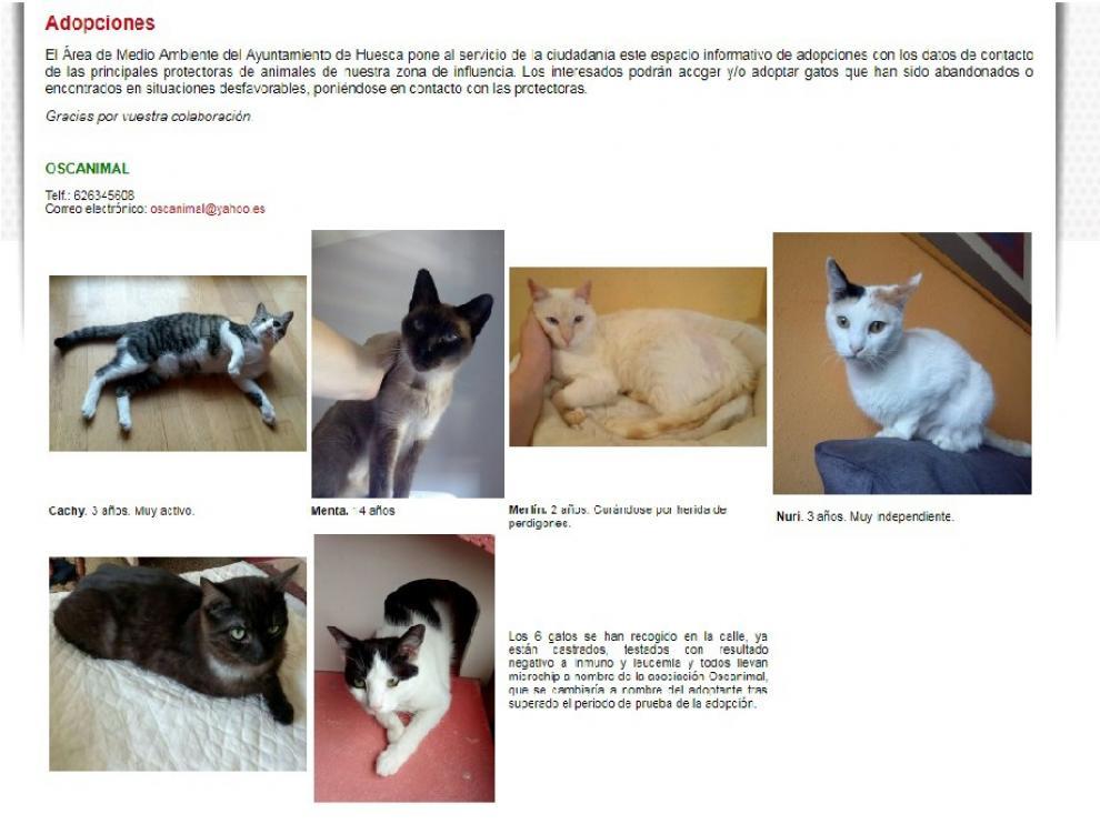 Gatos que buscan hogar a través de la web municipal de Huesca.