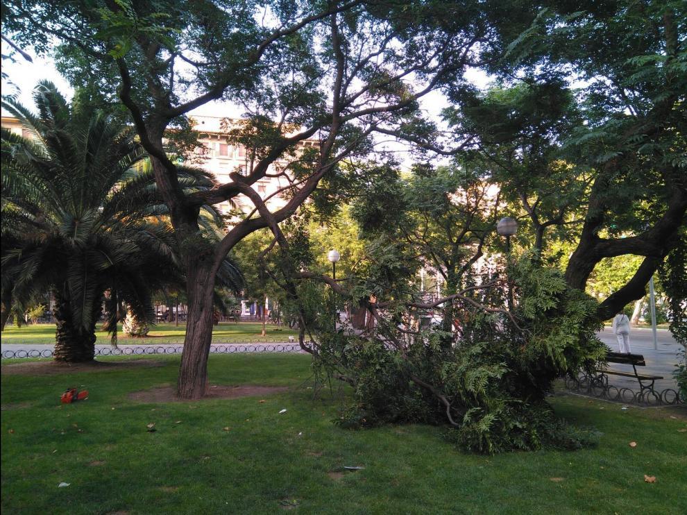 Cae una rama de grandes en la plaza de San Francisco