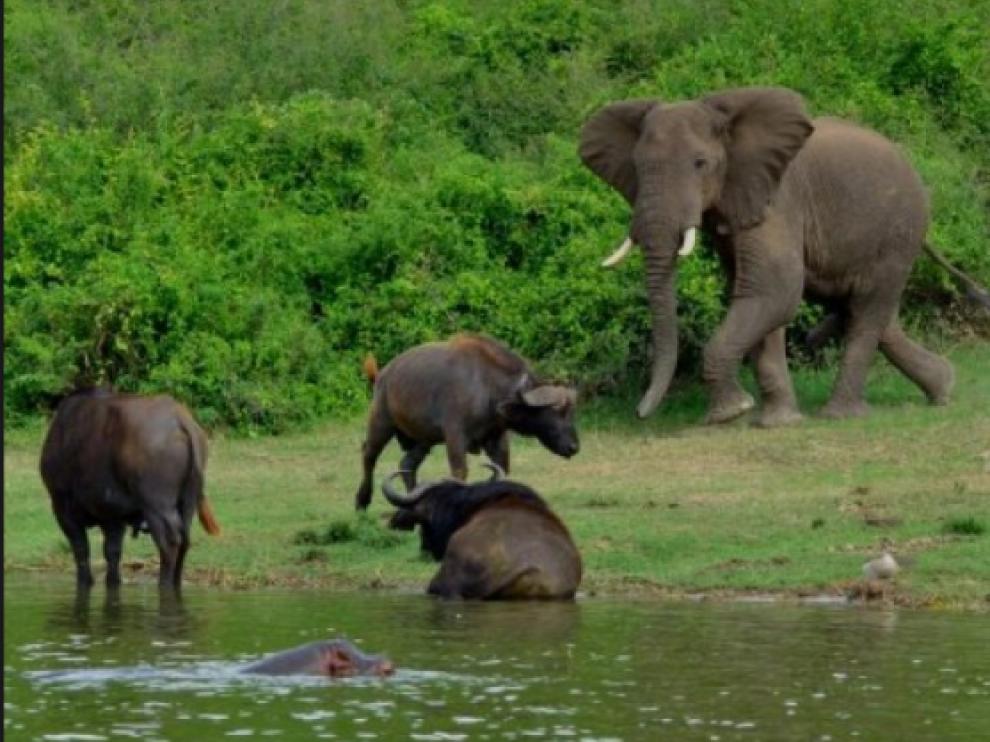 Un elefante, en el Parque Natural Chebera-Chorchora, donde se produjo el ataque a un turista español que le causó la muerte.