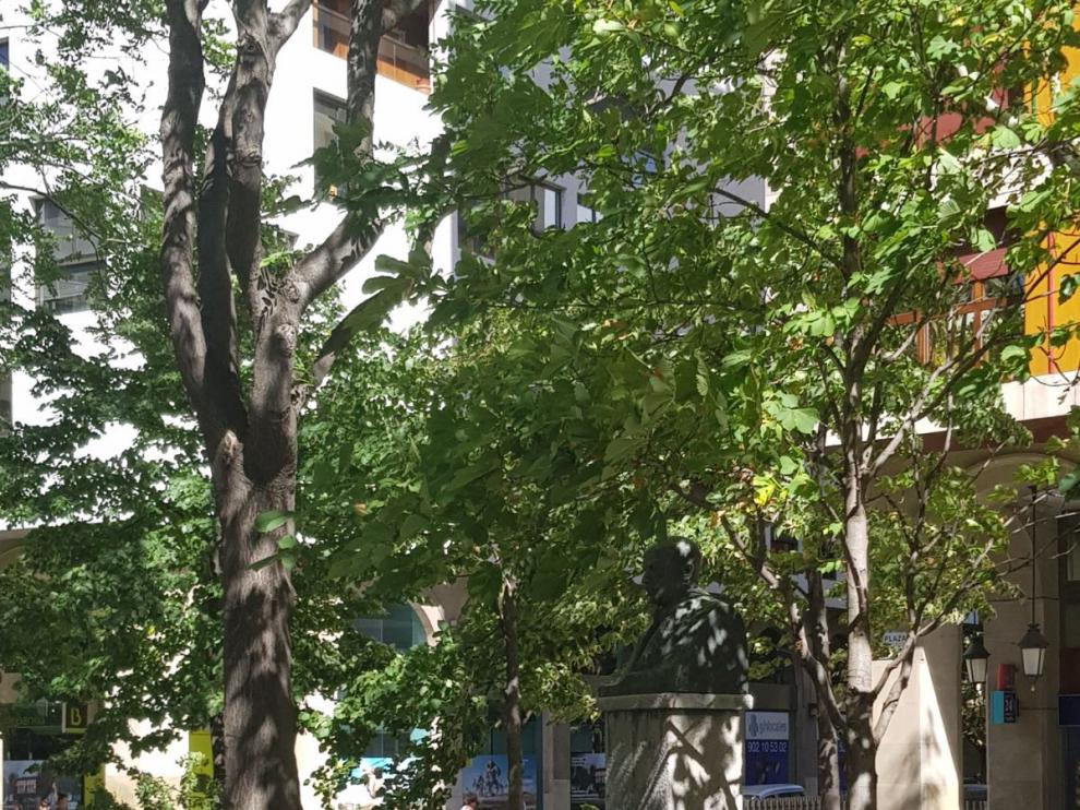 Una rama ha caído en la plaza de Aragón