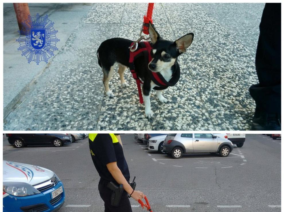 Imagen de la perra perdida