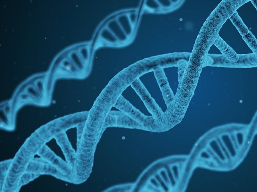 Las variaciones en el ADN mitocondrial originadas durante las antiguas migraciones humanas pueden desempeñar un papel importante en la predisposición a los TEA.