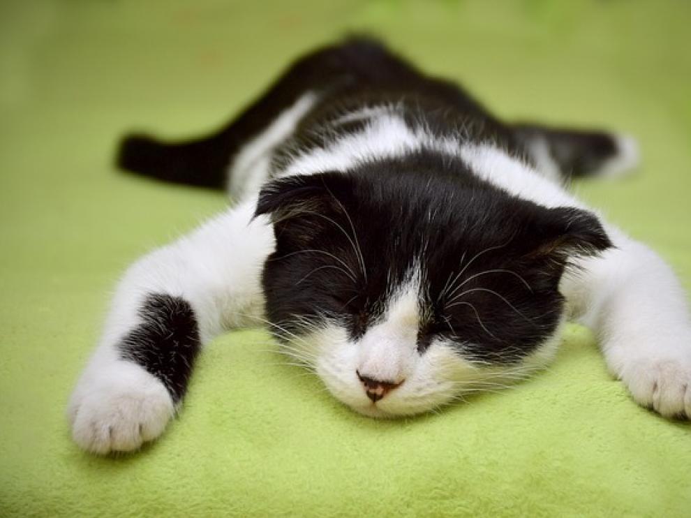 ¿Qué podemos hacer para conciliar el sueño?