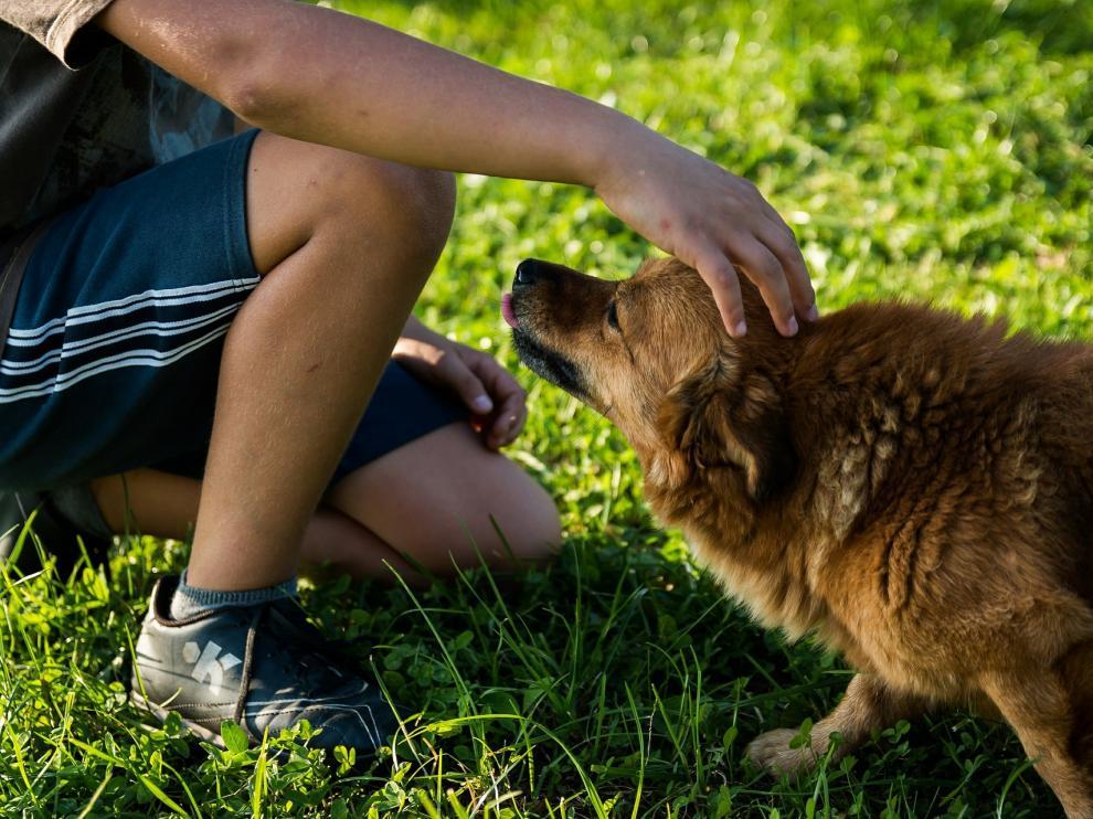 Los perros son mucho más que simples mascotas.