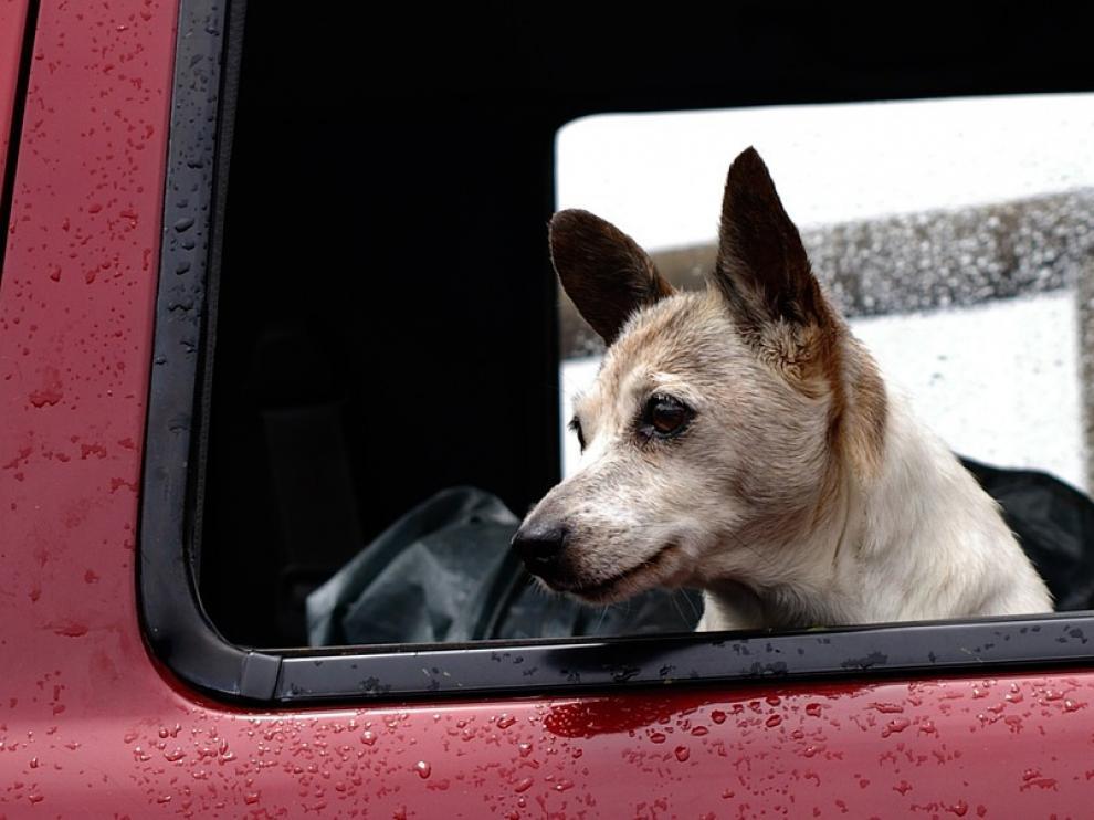 Hay mascotas especialmente vulnerables a los cambios bruscos de temperatura o a la humedad.