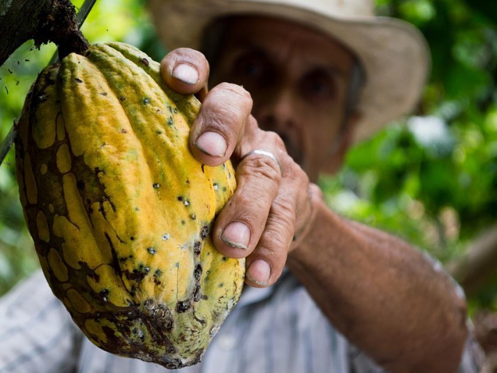Tomar cacao natural puede proteger de enfermedades cardiovasculares.
