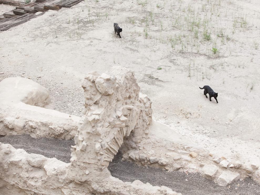 Dos de los gatos de la colonia paseaban ayer entre las ruinas del Teatro Romano.